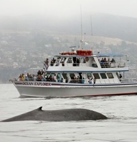 Newport Landing Whale Watching Excursion