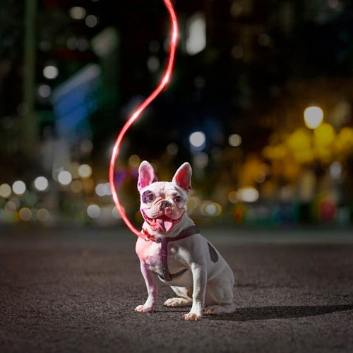 Light-Up Leashes : $5 + Free S/H