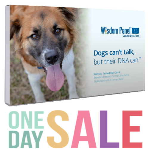 36% off Wisdom Panel Dog Breed DNA Test Kit : $50.99 + Free S/H